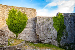 Medieval wall's ruins with greenery in Old town Bar, Montenegro, Royalty Free Stock Image
