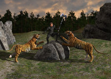 Medieval Warrior Battling Tigers Illustration Stock Photos