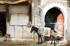 Medina de Fes Images libres de droits