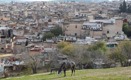 Medina of Fez in Morocco from nearby hill Royalty Free Stock Images