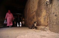 Medina van het dagelijkse leven van Fez Stock Foto's