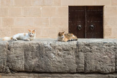 Medina Wall with Cats (1). Fortified Wall around Tunsian Old Town with Cats Stock Image