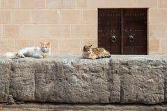 Medinamuur met Katten (1) stock afbeelding