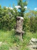 Medio árbol Imagenes de archivo