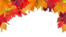 Medio marco de las hojas de arce multicoloras del otoño Foto de archivo libre de regalías