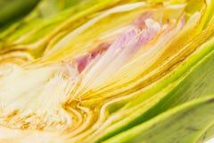 Medio tiro fresco de la macro de la alcachofa Fotos de archivo libres de regalías