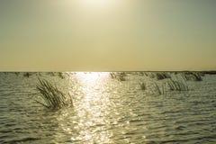 Mediodía en las aguas del delta de Danubio fotografía de archivo