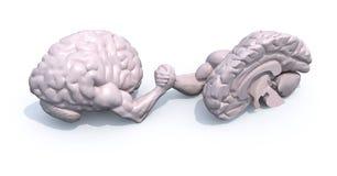 Medios cerebros que hacen wrestlin del brazo Fotos de archivo