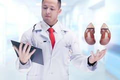 Medique guardar os órgãos humanos e a tabuleta em um hospital De alta resolução Imagem de Stock Royalty Free