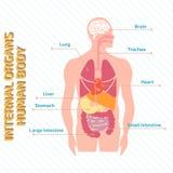 Medisch infographic menselijk lichaam Stock Foto's