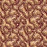 medische close-up van hersenen   Stock Afbeelding