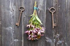 Medische de bloemenbos van kruidenechinacea en oude roestige sleutel op muur stock afbeeldingen
