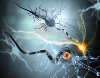 Medische illustratie, zenuwcellen Stock Afbeeldingen