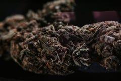 Medische Marihuana, Indica Cannabis, Sativa, Trichomes, THC, CBD, kankerbehandeling, onkruid, bloem, Hennep, gram, knop Stock Foto's