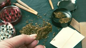 Medische marihuanaknoppen in de vrouwelijke hand Marihuanaknoppen, molen en verbinding op de achtergrond stock video