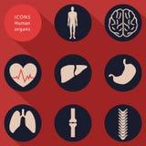 Medische pictogrammen, menselijke organismen, vlak ontwerp, vector Stock Afbeelding