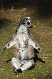 Meditação em um dia ensolarado Foto de Stock Royalty Free