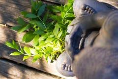 Meditación de Buda Fotos de archivo