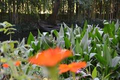 Meditación pacífica en jardín del ` s de Monet Fotografía de archivo