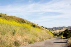 Meditar ao andar fora em fugas de caminhada vazias ao melhorar a saúde imagem de stock royalty free