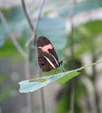 Meditar da borboleta Foto de Stock Royalty Free