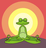 Meditare rana Immagini Stock