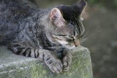Meditating cat Stock Image