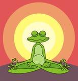 Meditating frog Stock Images