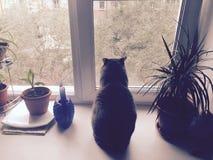 Meditation av katten Arkivbild