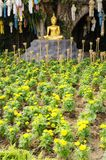 Meditation Buddha statue in garden Royalty Free Stock Images