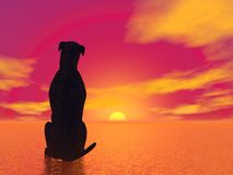 Meditation dog- 3D render Royalty Free Stock Photo