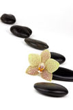 Meditation. Orchid flower and black stones on white ground Stock Images