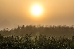 Meditation serenity on a herb field in a morning dawn. Full of mist and sun shining above as magic sunlight background Stock Photo