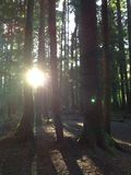Meditation woods. A cool photo of the Washington woods Royalty Free Stock Images