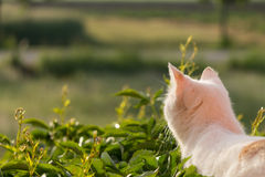 Meditativ katt i morgonsolen Royaltyfria Foton
