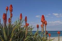 Mediterane fauna Royalty Free Stock Photo