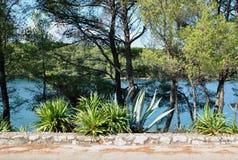 MEDITERRÁNEO, PLANTAS, ÁRBOLES Y MAR, ISLA DE HVAR Foto de archivo