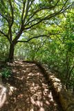 Mediterraan bos in Menorca met eiken bomen Royalty-vrije Stock Afbeeldingen