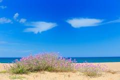 Mediterraan strand in zomer Royalty-vrije Stock Foto's