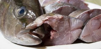 Mediterrane amberjack vissen stock foto