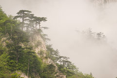 Mediterrane bergflora coverd met mist Stock Afbeeldingen