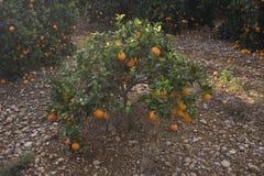 Mediterrane Landbouw Royalty-vrije Stock Afbeeldingen