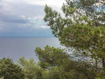 Mediterrane pijnboom met kalme overzees tijdens de zomeravond in Ibiza royalty-vrije stock foto's