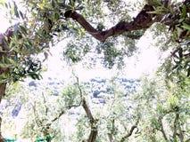 Mediterrane tuin, close-up de tak Royalty-vrije Stock Afbeelding