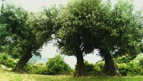 Mediterrane tuin, close-up de tak royalty-vrije stock afbeeldingen