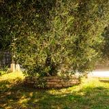 Mediterrane tuin, close-up de tak stock foto's
