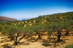 Mediterrane tuin, close-up de tak Stock Foto