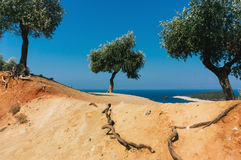 Mediterrane tuin, close-up de tak Royalty-vrije Stock Foto