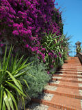 Mediterrane tuintreden Stock Afbeeldingen