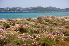 Mediterrane vegetatie Stock Foto's